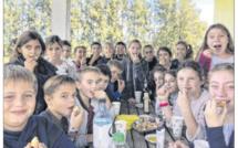 De l'arbre à l'assiette, l'olive n'a plus de secrets pour les écoliers de Travu